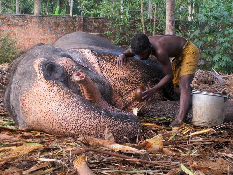 Elefantenwaesche